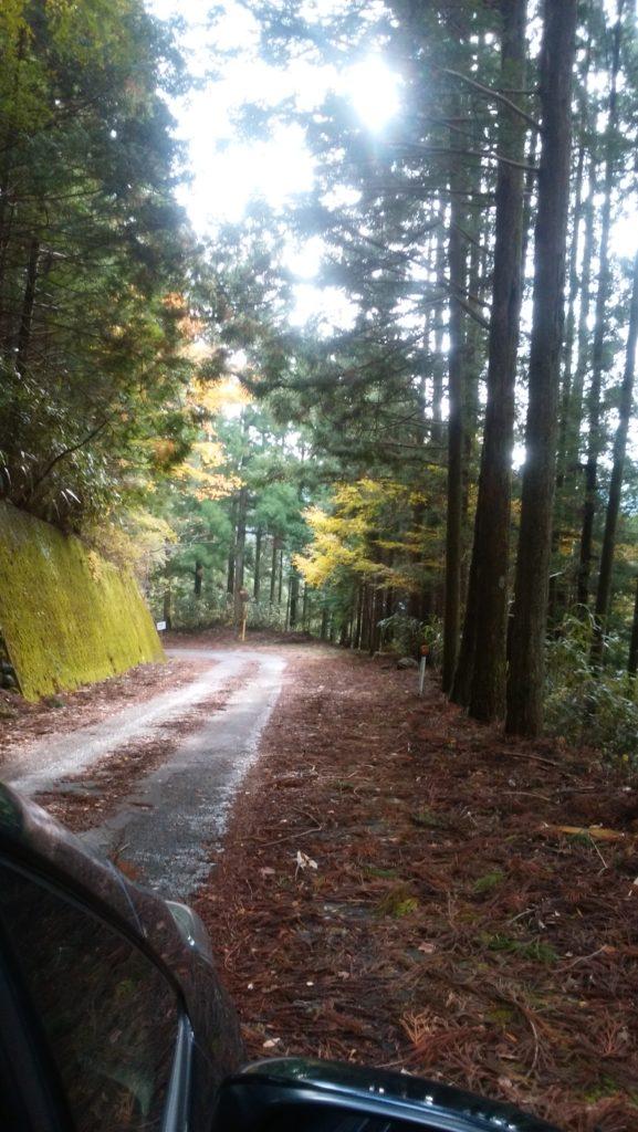 秋の四国カルストを天空ドライブ